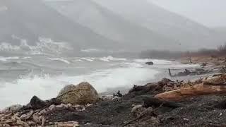 На Камчатке голодные медведи в шторм пошли на рыбалку (видео)