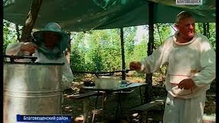 Семья амурских пасечников поставит на рынок тонны меда и медовой продукции