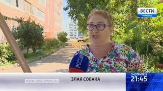 «Вести: Приморье»: Агрессивная собака второй год терроризирует жителей одной из улиц Владивостока
