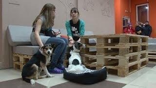 Первое пёсокафе Dog House открылось в Новосибирске