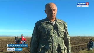 В Чупинском бору высадили 22 тысячи молодых сосен