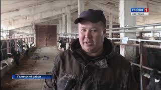 В хозяйстве Ладыгино в Костромской области построили роддом для коров