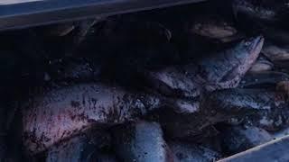 На Камчатке поймали браконьеров с тонной рыбы | Новости сегодня | Происшествия | Масс Медиа