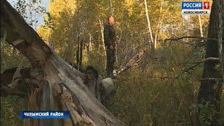 В лес за хворостом: «Вести» узнали, как собирать валежник и не нарушать закон