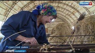В Марий Эл отметили День работника сельского хозяйства - Вести Марий Эл