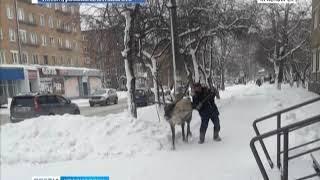 Житель Назарова прогулялся по городу с оленем