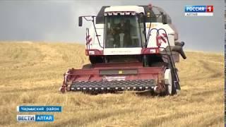 Как в условиях лоскутного земледелия работают алтайские механизаторы?