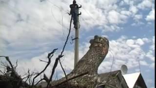 В Ярославской области из-за сильного ветра возникли перебои с энергоснабжением