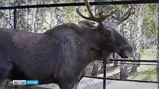 Для пожилых людей на две недели сделали бесплатный вход в зоопарк Барнаула