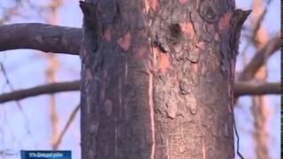 Полвека на восстановление: что происходит на месте выгоревшего леса в Усть-Донецком районе