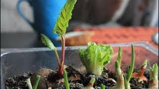 Разумная экономия: урайские студенты-повара сами выращивают овощи и фрукты