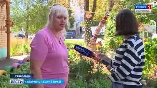 Сказочные клумбы Ставрополя руками горожан