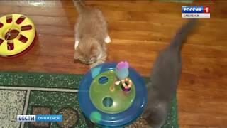 Смоляне «отмурчают» Всемирный день кошек