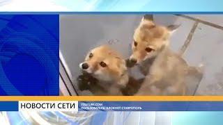 В Ставрополе водитель сбил девушку и пустился в пляс. Рубрика «Новости из сети»