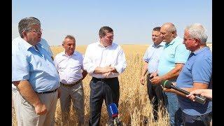 В Волгоградской области собрали миллион тонн зерна