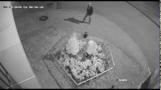 Ночью в Ярославле молодая женщина украла декоративное дерево