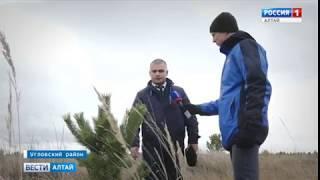 Рейд против чёрных лесорубов провели в Угловском районе