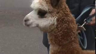 В Ярославском зоопарке организовали звериный детский сад