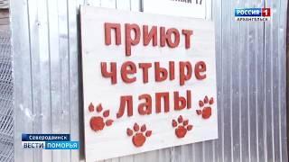 """Администрация Северодвинска окажет помощь приюту для животных """"Чистые лапы"""""""