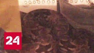 Ядовитые соседи: на Ленинском проспекте отловили 20 змей - Россия 24