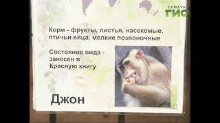 В самарском зоопарке лапундер Джон отметил свой День Рождения