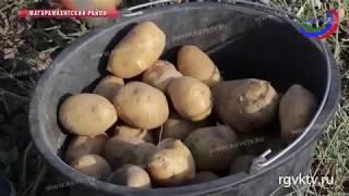 Сельхозпродукция Дагестана успешно осваивает российский рынок