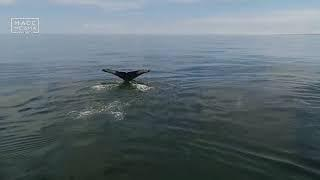 Ученые пересчитают китов и крабов на Камчатке | Новости сегодня | Происшествия | Масс Медиа