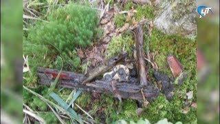 Под Малой Вишерой обнаружено место падения советского истребителя