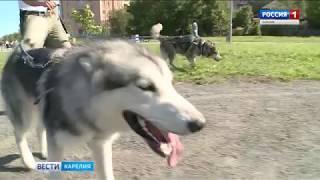 """""""Вести-Карелия"""". 22.08.2018"""