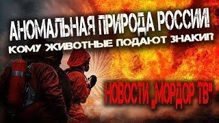 Новости Мордора в России сегодня! Аномальная природа в России! Кому животные подают знаки!