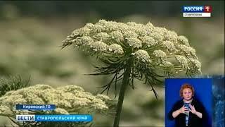 На Ставрополье за семенами!