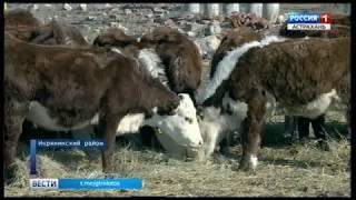"""Животновод из Икрянинского района выиграл грант по программе """"Семейная ферма"""""""