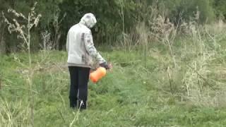 Более 1,4 тысячи кустов конопли вырастил наркосадовод в п.Известковый ЕАО(РИА Биробиджан)