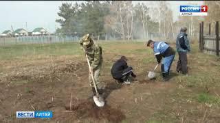 В Алтайском крае20 лет восстанавливают лес после одного крупного пожара