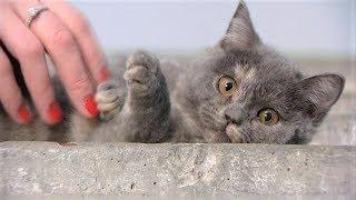 Сколько кошек и собак обрели хозяев в Ханты-Мансийске благодаря программе «С 7 до 10»