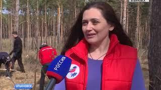 «Аллею героев» высадили в Ульяновске