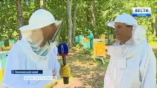 Холодная и дождливая погода срывает урожай меда в Приморье