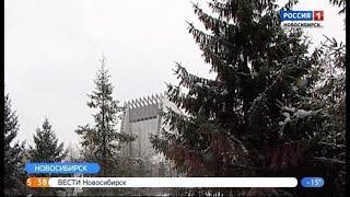 Елки в Новосибирске обработали антивандальным раствором