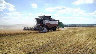 Урожай - достойный: аграрии «МАПО «Ардатов» продолжают убирать зерновые