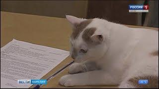 В Петрозаводске  раздавали котов и кошек