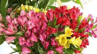 Во сколько обойдется букет цветов на 1 сентября