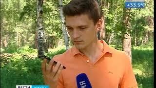 О судьбе реликтовой рощи в Иркутске беспокоятся местные жители