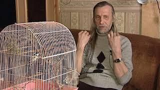 Дом, где всегда весна: в квартире Евгения Кузнецова обитает около 40 птиц