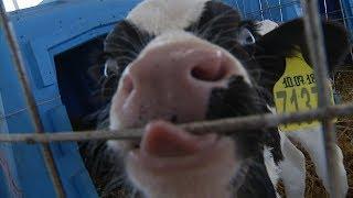 В будущее ставропольских молочников заглянули в Ессентуках