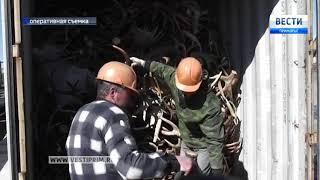 12 тонн кровавого груза обнаружили в контейнере на станции Угольной