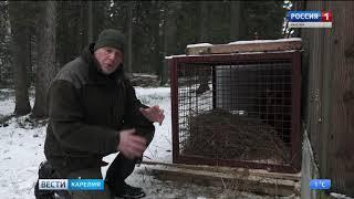 Беспризорному медвежонку из Олонецкого района нашли дом