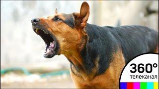 Собачий лай не даёт покоя жителям посёлка в Раменском районе
