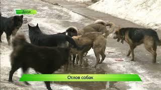 ИКГ Отлов собак  Проверка КСП #4
