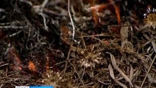 В Уярском районе на полях горит сухая трава
