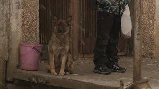 Жизнь собачья: в Косулино цепной пес покусал двух женщин